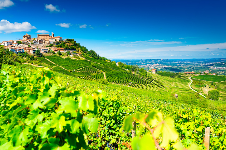 Barolo vineyards Piëmont